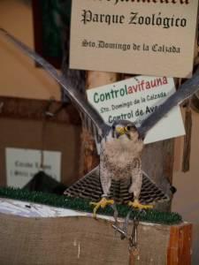 Exibición de Aves Rapaces