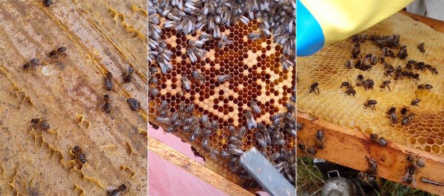 abejas produciendo miel