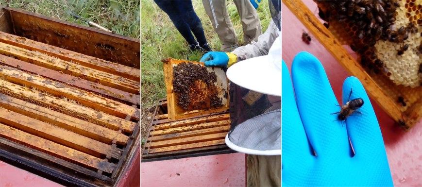 abejas-en-panales2