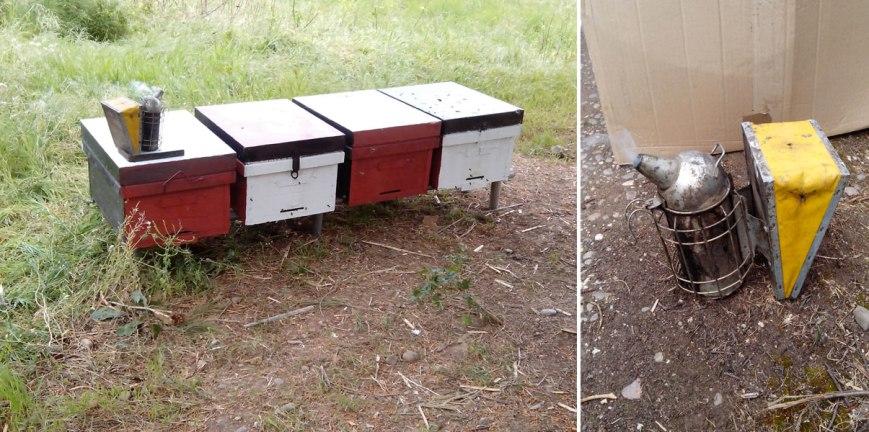 colmenas de abejas para miel